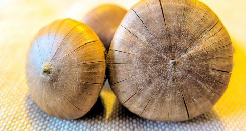 厚鳞柯风流果Lithocarpus pachylepis A. Camus