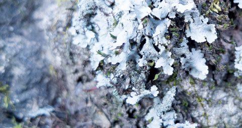十月末的地衣 October Lichen