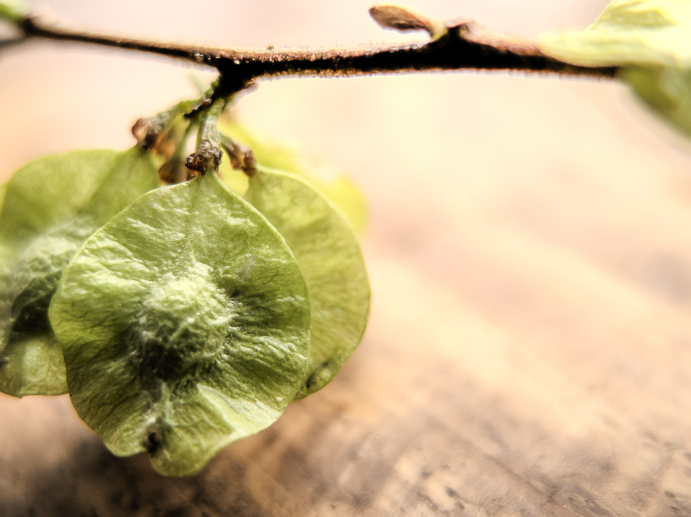 sprouts.幼芽