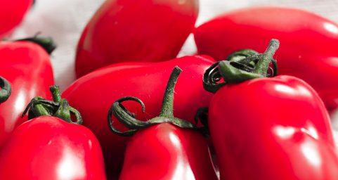 409 tomato.409柿子