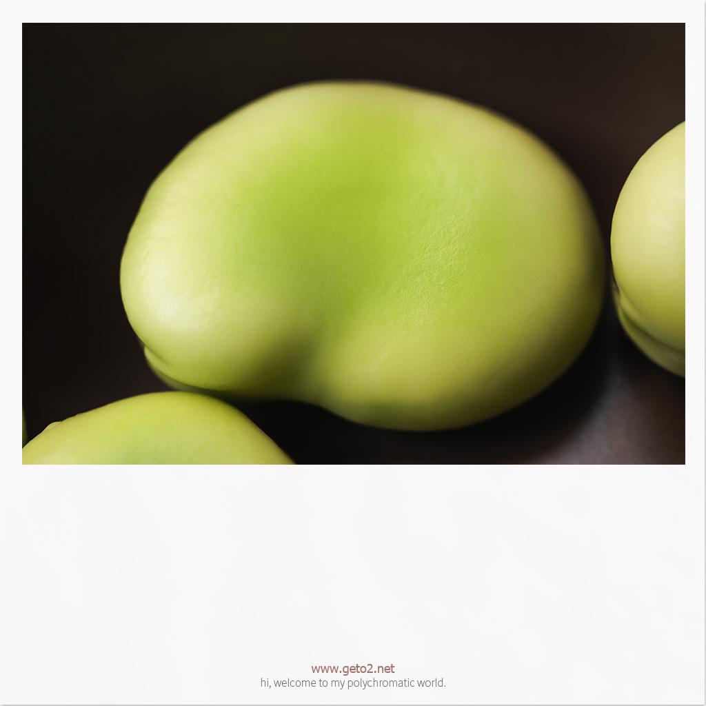 Vicia faba.蚕豆