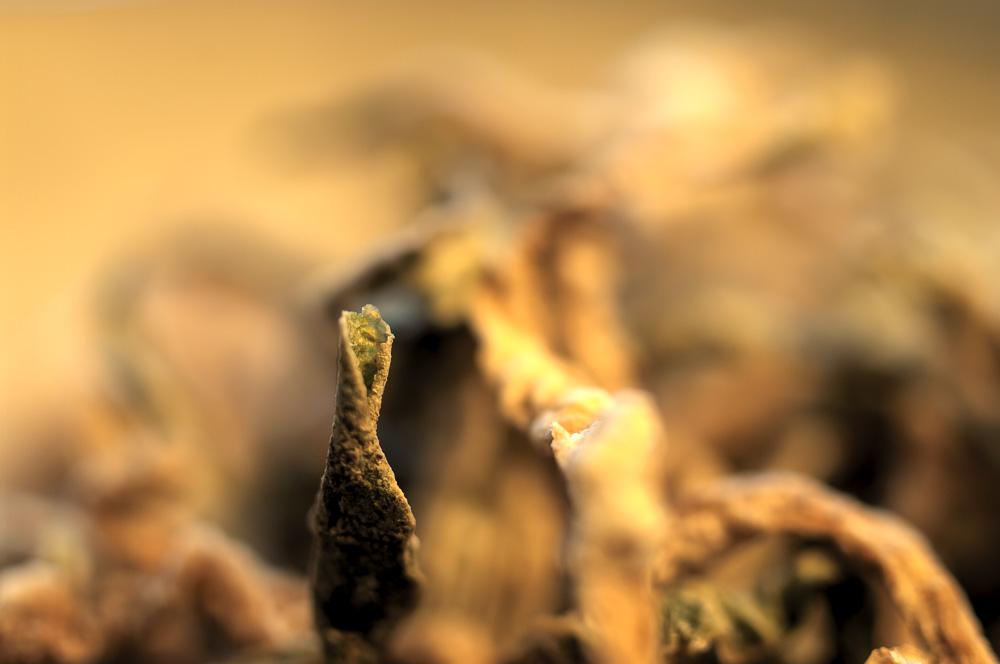 dried turnip.萝卜干