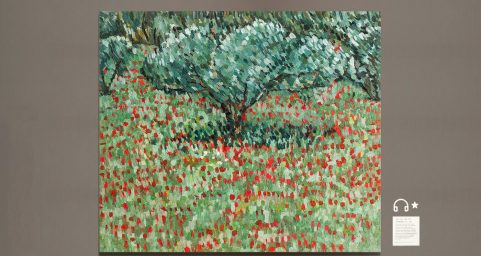 olive grove and poppy.