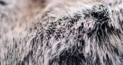 fur.毛