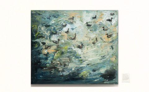 ducks swimming in the river.