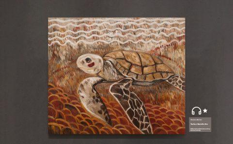 有红腮的海龟.